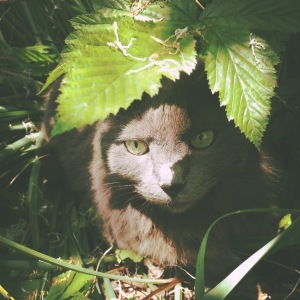kitty in the shade